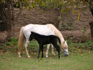 Horses at the Casa Hacienda San José.