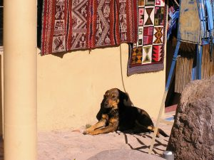 A dog in the town of Ollantaytambo, Cusco.