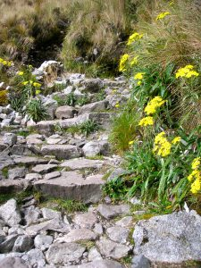 Day 2: Flowers on the Camino Inka.