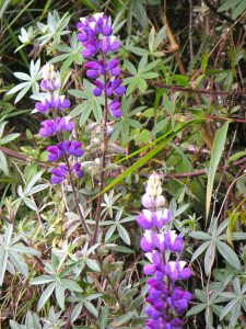 Day 4: Flowers on the Camino Inka.