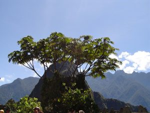 At the Machu Picchu Inca Ruins in Perú.