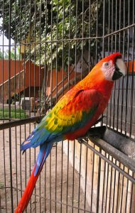 A tropical bird at the Granja 21 Restaurant and Zoo, Lima.